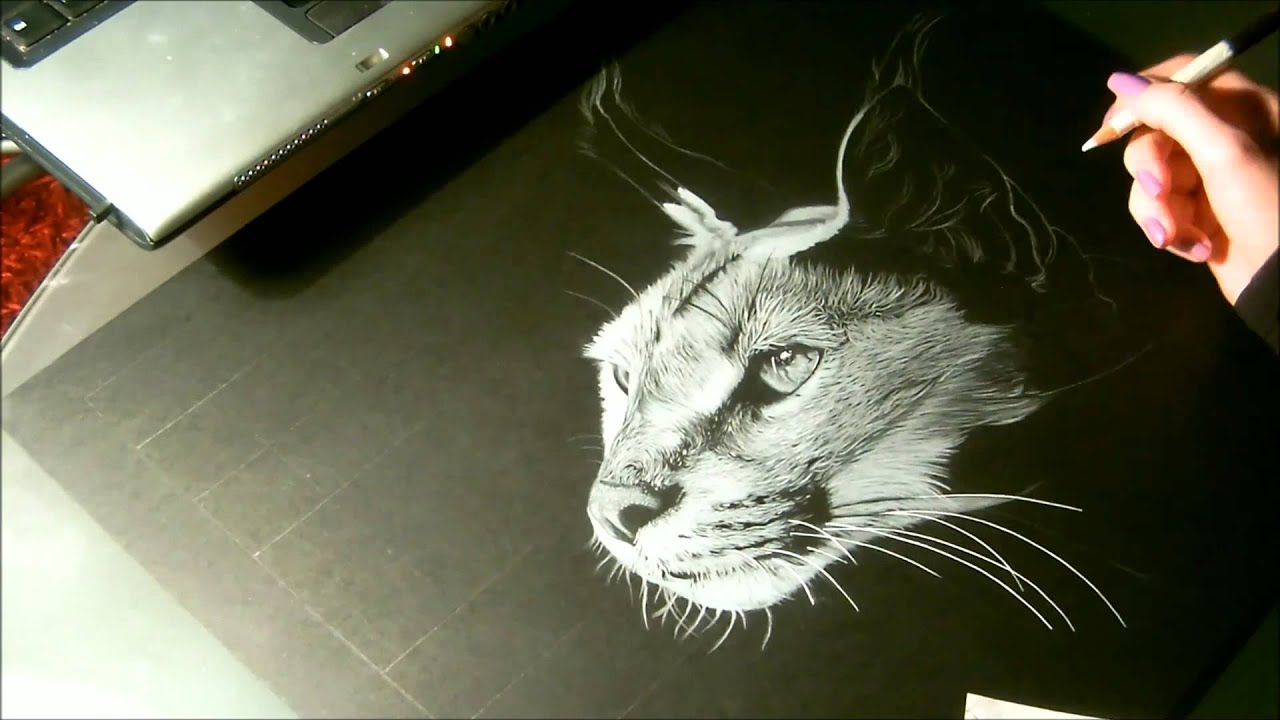Speed drawing animal caracal dessin sur papier noir - Animal dessin ...