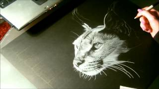 Speed drawing animal, Caracal, dessin sur papier noir