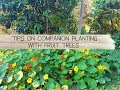 - Tips on Companion Planting with Fruit Trees - The Micro Gardener