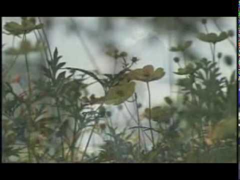 nhung bong hoa trong vuon bac. Trinh bay: Ca sy Thuy Duong + Nhóm múa THPT Nga Son
