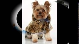 одежда для собак в кирове