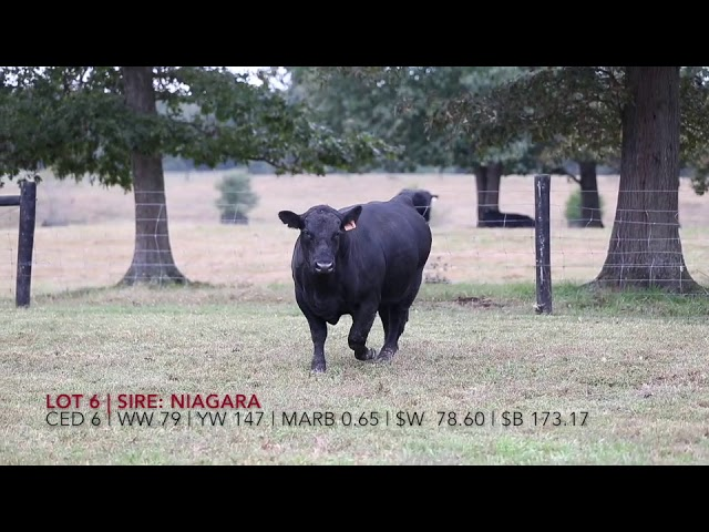 Edgewood Angus Lot 6