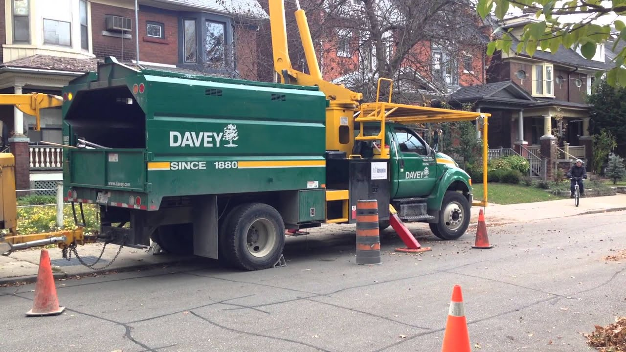 Davey Tree Removal October 13th 2013 Toronto On Youtube