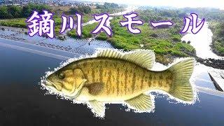 藤岡にスモールが釣れると聞いて行ってみた。 thumbnail