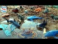 Toy Sea Animals Island - Learn Animal Names - Fun Toys For Kids Video