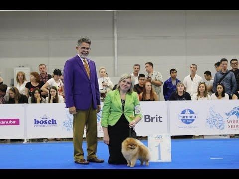 World Dog Show 2016 Moscow, Pomeranian, Males