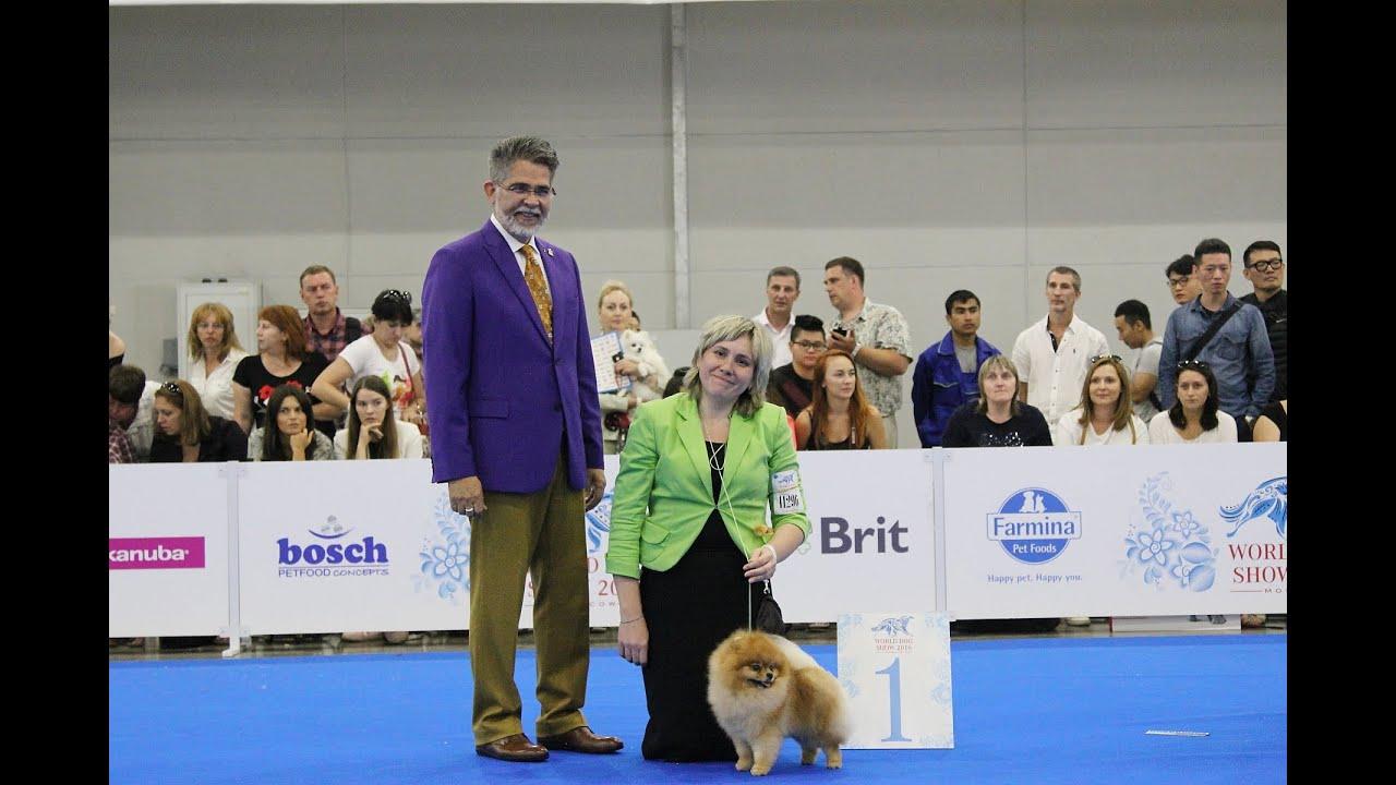 World Dog Show 2016 Moscow Pomeranian Males Youtube