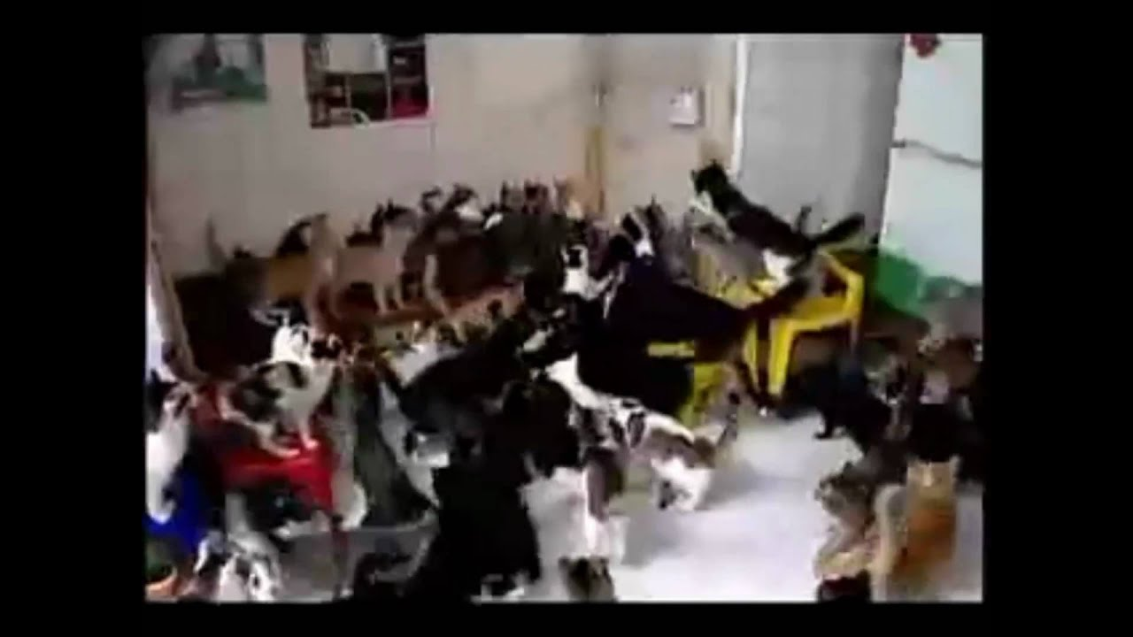 Youtube Cat Mosh