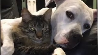 The Cutest Cats and Dogs Compilation 2018 Funny Pet Videos