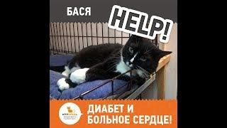 Кошке Басе нужна помощь - диабет и больное сердце!