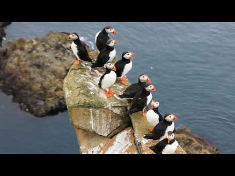 Faroe Islands & Iceland Vacation - 2016