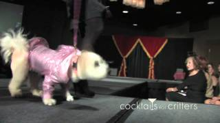 "Calgary Humane Society ""cocktails For Critters"" - Funny Cute Dog Dogs Bizboxtv Web Video"