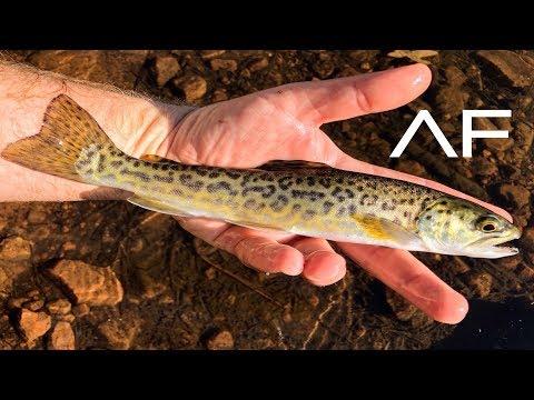 TIGER TROUT FISHING!!! WOODS CANYON LAKE, ARIZONA FISHING