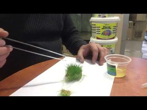 Обзор Аквариумное растение Элеохарис мини (Eleocharis sp. mini) в питательном геле