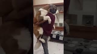 Family love❤️ Saint Bernard puppy