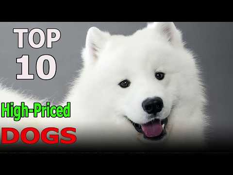 Top 10 Most High-Priced Dog Breeds in the World | Top 10 animals