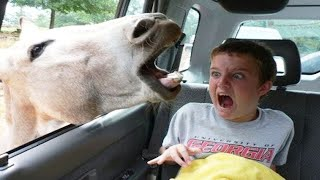 TRY NOT TO LAUGH - Funny Animal videos - Funny Baby Videos  2020