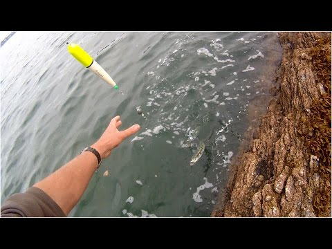 Shore Fishing - Float Fishing for Mackerel - Tips for Beginners