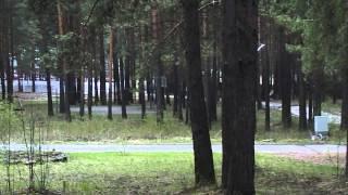 Дезинфекционная обработка лесной зоны