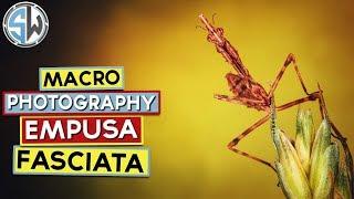 Macro Photography - Empusa Fasciata