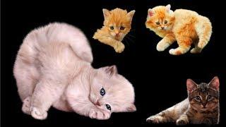 Cмешные гифки про котят