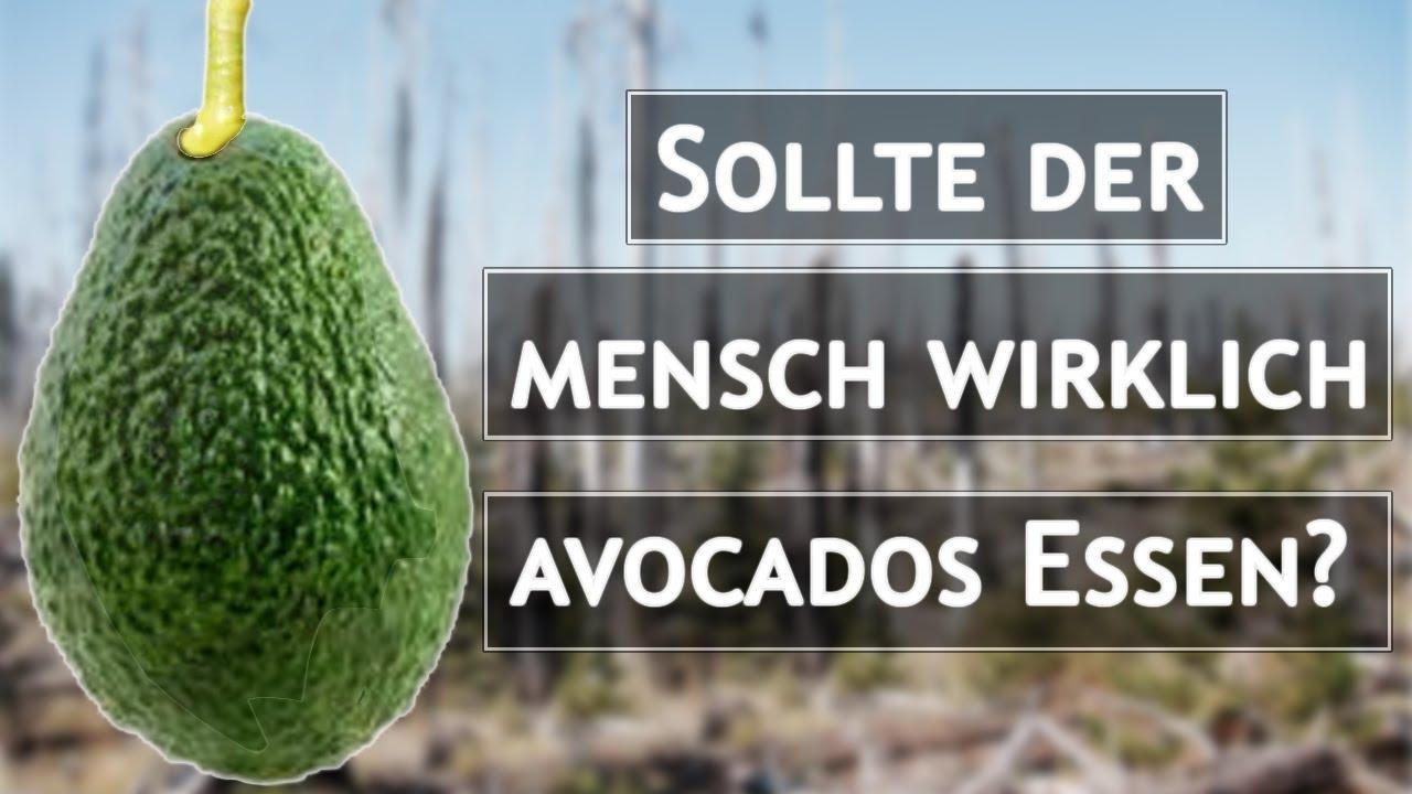 Sollte der Mensch wirklich Avocados essen?