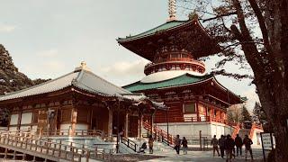 成田山新勝寺 境内