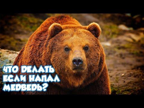 Что делать, если напал медведь?