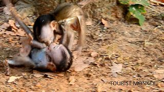 Two babies monkeys fight, Very adorable baby monkey fighting