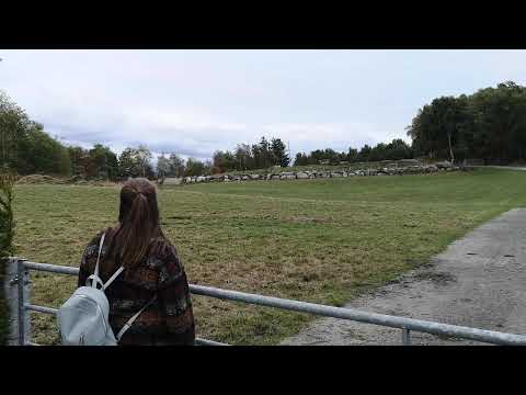 Kulokk // Kulning // Cattle call
