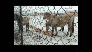 Парк животных ледникового периода на Алтае