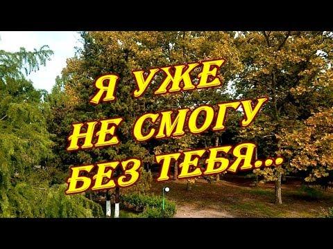 Золотые глаза сентября греют сердце чарующим взглядом...