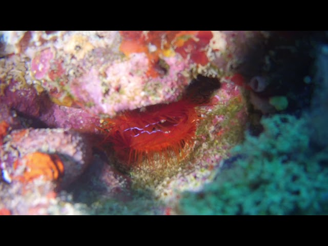Disco Clam video by Laura Tolbird