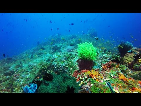 Scuba Diving in India, Andamans, Havelock  Dixon's Pinnacle v1