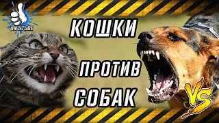 Агрессивные кошки или как кошки щемят собак КОШКИ против СОБАК #onutube