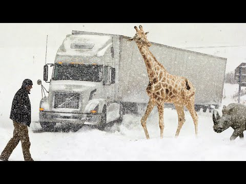AFRICA was covered with SNOW! Сraziest Snowstorm in Lesotho, South Africa