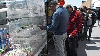 كيف تختار طيور جيدة وغير مريضة قبل شرائها