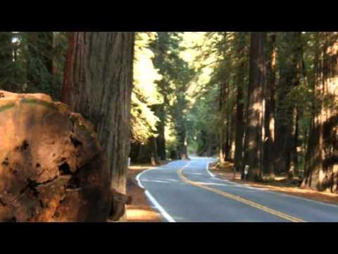 The Legend Of The Cedar Tree