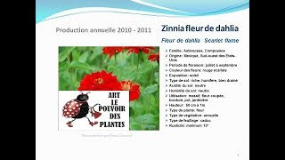 fiche technique plante annuelle