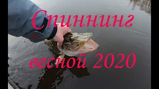 Ловил окуня а схватила большая щука Рыбалка на спиннинг 2020 Спиннинг весной в марте 2020