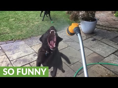 10-year-old dog has hated of water hose since birth