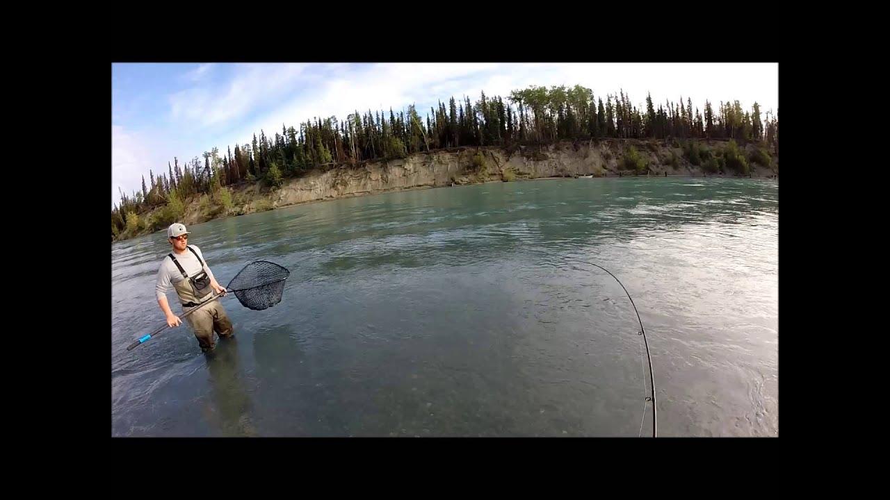 Fly fishing kenai river huge sockeye salmon on the fly for Kenai river fish counts