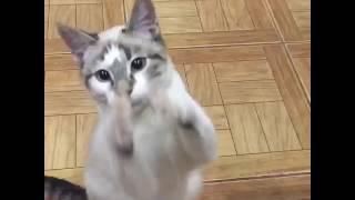 Чудо кошка просит кушать