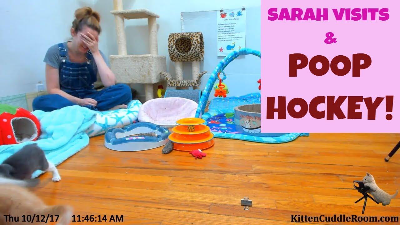 Foster mom Sarah morning visit & some petrified POOP HOCKEY at 31:50 10/12/17 LIVE 24/7 Kitten Cam