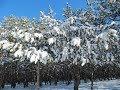 Времена года в Крыму под музыку Вивальди Зима mp3