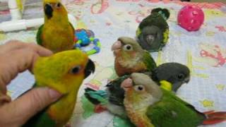 Bedtime for baby Parrots
