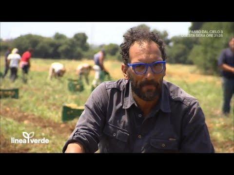 I segreti della patata di siracusa linea verde estate 23 for Linea verde favaro