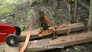 フロアージャッキで根っこ(No1)抜き(完了!)Remove  stump No1 with floor jack(Finished!)