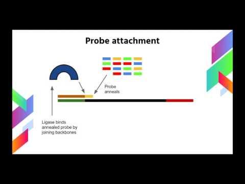 Next Gen SOLiD DNA Sequencing Method Explained
