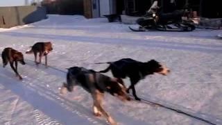 2011年12月 カナダ・イエローナイフのオーロラツアー会社 ベックスケン...